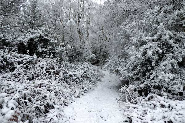 Sandhill Wood in the snow