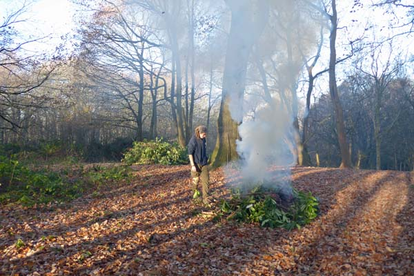 Clearing invasive rhododendrons