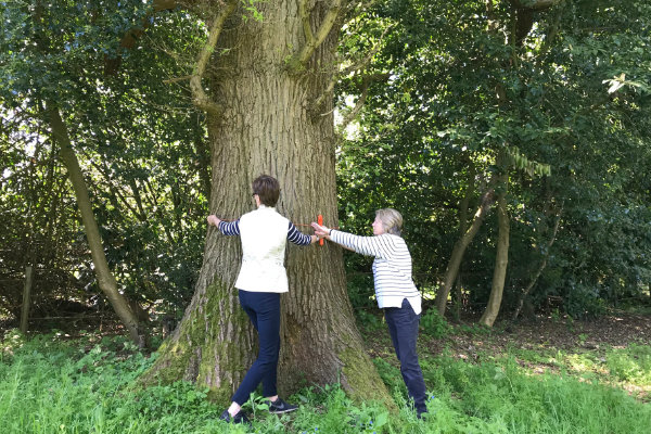 Measuring the Girth of the largest Oak in Sandhill Wood